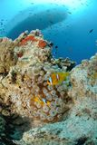 Vibrant and colourful tropical reef Royalty Free Stock Images