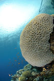 Vibrant and colourful tropical reef Stock Image
