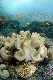 Vibrant and colourful tropical reef Stock Photos