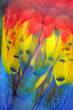 Vibrant Colours Of A Macaw Parrot Royalty Free Stock Photos