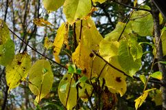 Vibrant colours on tree and plant in autumn Stock Image