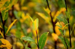 Vibrant colours on tree and plant. In autumn Royalty Free Stock Photos