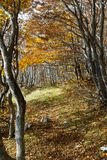 Trees autumn. Vibrant coolorful trees autumn in matese park Royalty Free Stock Images