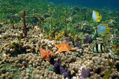 Vibrant coral reef Stock Photos