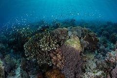 Vibrant Coral Reef and Small Fish Stock Image