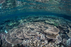 Vibrant Coral Reef Royalty Free Stock Images