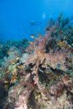 Vibrant coral sea Stock Photo