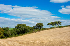 Vibrant Country Landscape with Straw Field Royalty Free Stock Images