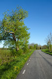 Vibrant country road Stock Image