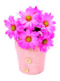Vibrant daisies Stock Photo