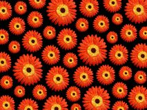 Vibrant daisy background. Image of vibrant daisy background Royalty Free Stock Photos