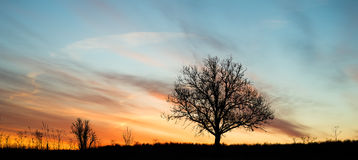Vibrant dawn single tree silhouette Stock Images