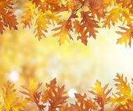 Vibrant fall foliage. Fresh oak fall tree foliage boders on bright park background stock images