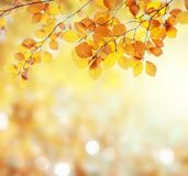 Vibrant fall foliage. Fresh yellow fall tree foliage on bokeh background with sparkles and sun beams royalty free stock photography
