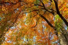 Vibrant fall foliage Stock Image
