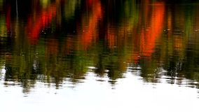Vibrant fall foliage reflected on water stock video footage