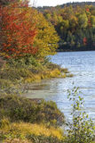 Vibrant fall foliage on shoreline of Beaver Pond, Berlin, Maine. Royalty Free Stock Images