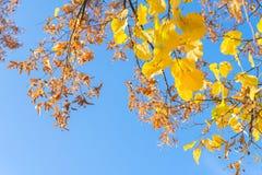 Vibrant fall foliage Royalty Free Stock Photos