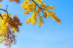 Vibrant fall foliage Royalty Free Stock Images