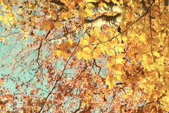 Vibrant fall foliage Stock Images