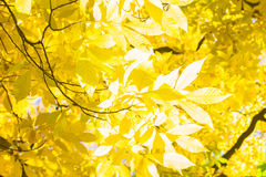 Vibrant fall foliage Royalty Free Stock Photos