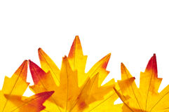 Vibrant Fall Leaf Background Stock Photo