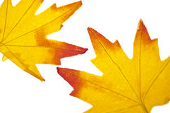 Vibrant Fall Leaf Background Stock Images