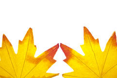 Vibrant Fall Leaf Background Stock Photos