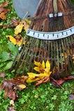 Vibrant Fall leaves with bamboo rake Royalty Free Stock Photography