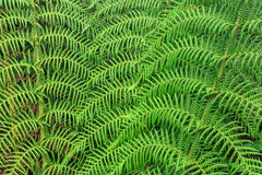 Vibrant fern abstract background texture Stock Photo