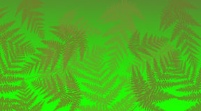 Vibrant fern background. Stock Photo