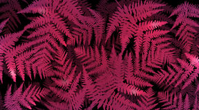 Vibrant fern background. Abstract illustration depicting many pink fern leaves against black background Stock Photo
