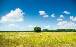 Vibrant field Stock Image