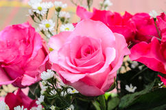Vibrant Floral Background of Roses Stock Images