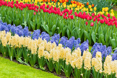 Vibrant flowerbed spring flower park Royalty Free Stock Images