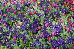 Vibrant flowerbeds Stock Images