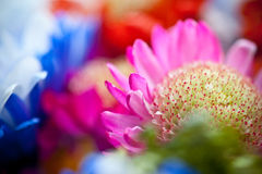 Vibrant Flowers Stock Photo