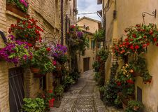Free Vibrant Flowers Adorn A Narrow Alleyway In The Hilltop Village Of Spello, Umbria Royalty Free Stock Photography - 191641957
