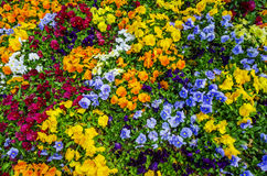 Vibrant flowers Royalty Free Stock Images