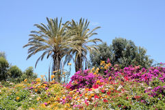 Vibrant flowers, Fuerteventura, Spain Royalty Free Stock Photo