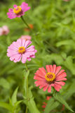 Vibrant flowers in a garden. Variety of blooming flowers in a garden stock images
