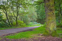 Vibrant forest. Fresh green vibrant forest with pathway running through Royalty Free Stock Photos