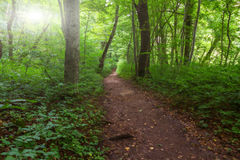Vibrant forest path Royalty Free Stock Photo
