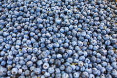 Vibrant, fresh blueberries. Royalty Free Stock Photo