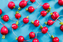 Vibrant fresh radish on blue wooden board, flat lay. Overhead Stock Images