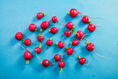 Vibrant fresh radish on blue wooden board, flat lay. Overhead Stock Photos