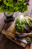 Vibrant fresh salad leaves from organic spring garden Royalty Free Stock Image