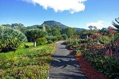 Vibrant Garden. A view of the Wollongong Botanical Gardens in Australia Stock Photography