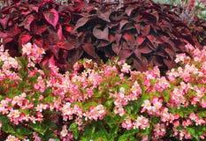 Vibrant garden border Stock Image