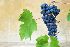 Vibrant grapes closeup photo Stock Photo